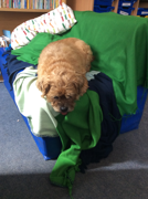 Red - The class dog